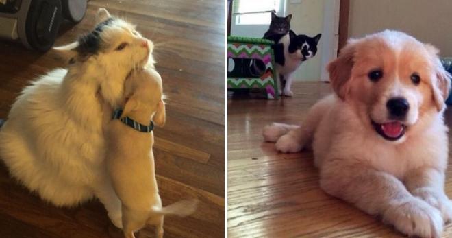 Реакция котов на появление в доме щенка: 15 очень забавных фото