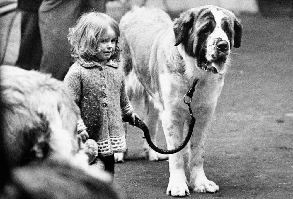 «Дай_ Джим_ на счастье лапу мне»_ фотографии Ширли Бейкер с выставок собак 1960_70_х 1