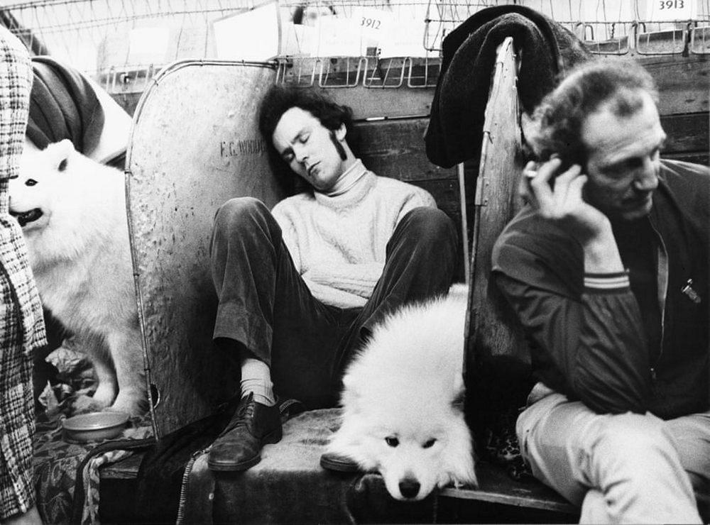 «Дай_ Джим_ на счастье лапу мне»_ фотографии Ширли Бейкер с выставок собак 1960_70_х 10