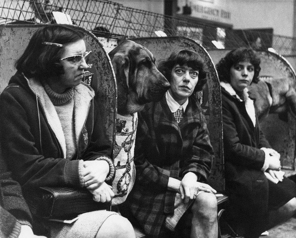 «Дай_ Джим_ на счастье лапу мне»_ фотографии Ширли Бейкер с выставок собак 1960_70_х 11