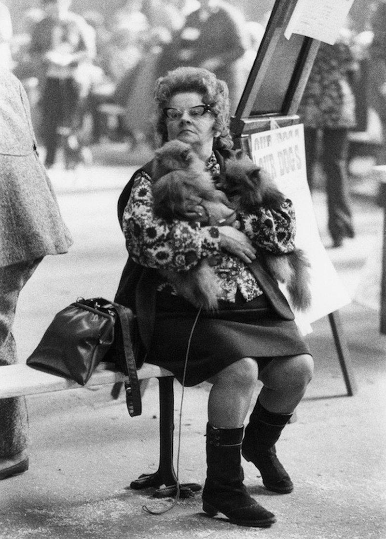 «Дай_ Джим_ на счастье лапу мне»_ фотографии Ширли Бейкер с выставок собак 1960_70_х 13