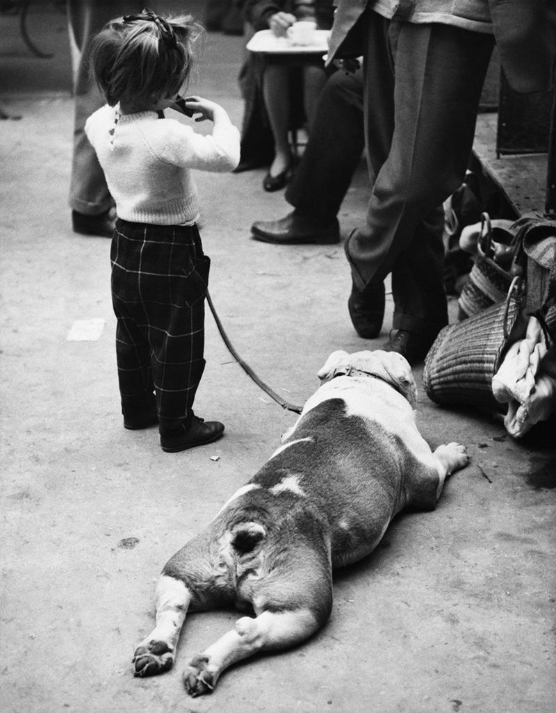 «Дай_ Джим_ на счастье лапу мне»_ фотографии Ширли Бейкер с выставок собак 1960_70_х 15