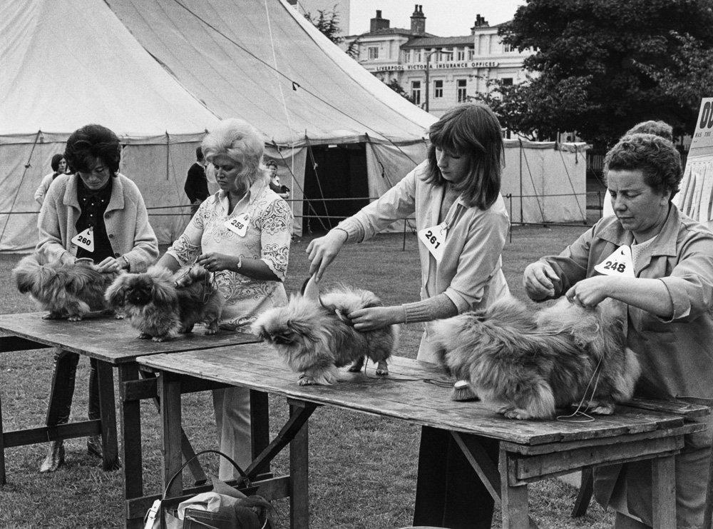 «Дай_ Джим_ на счастье лапу мне»_ фотографии Ширли Бейкер с выставок собак 1960_70_х 16