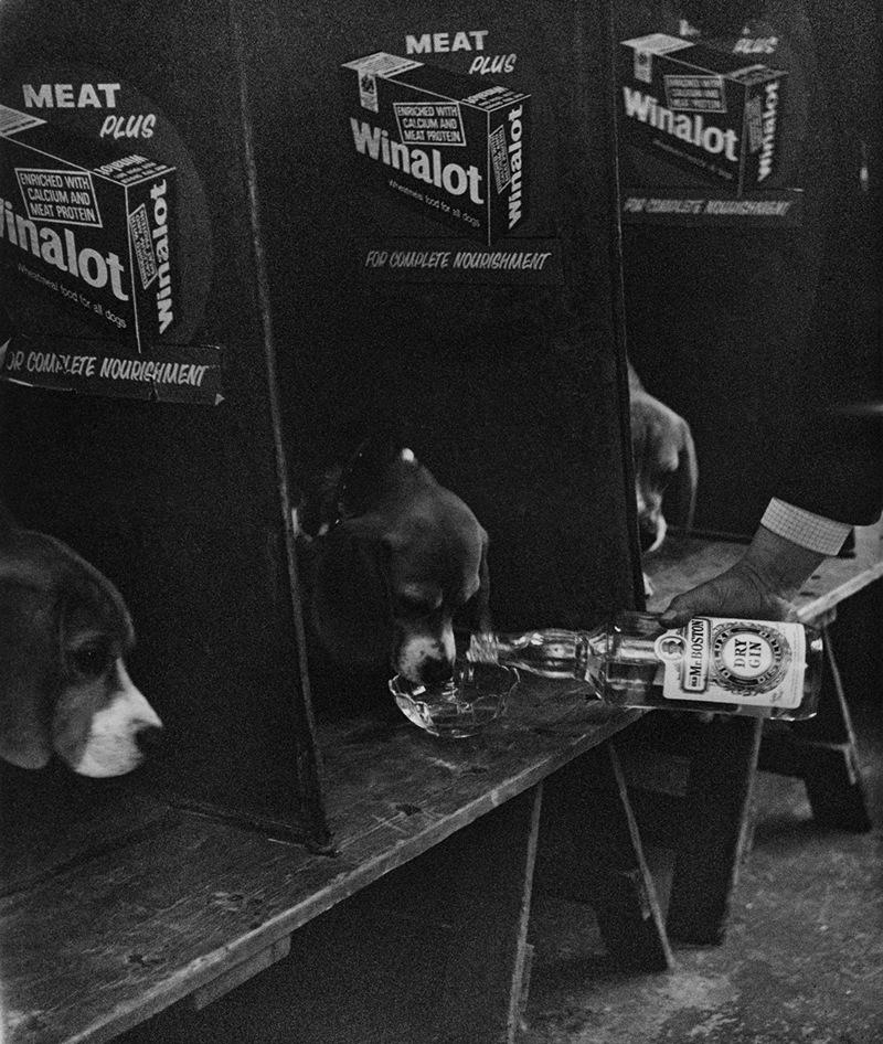 «Дай_ Джим_ на счастье лапу мне»_ фотографии Ширли Бейкер с выставок собак 1960_70_х 17