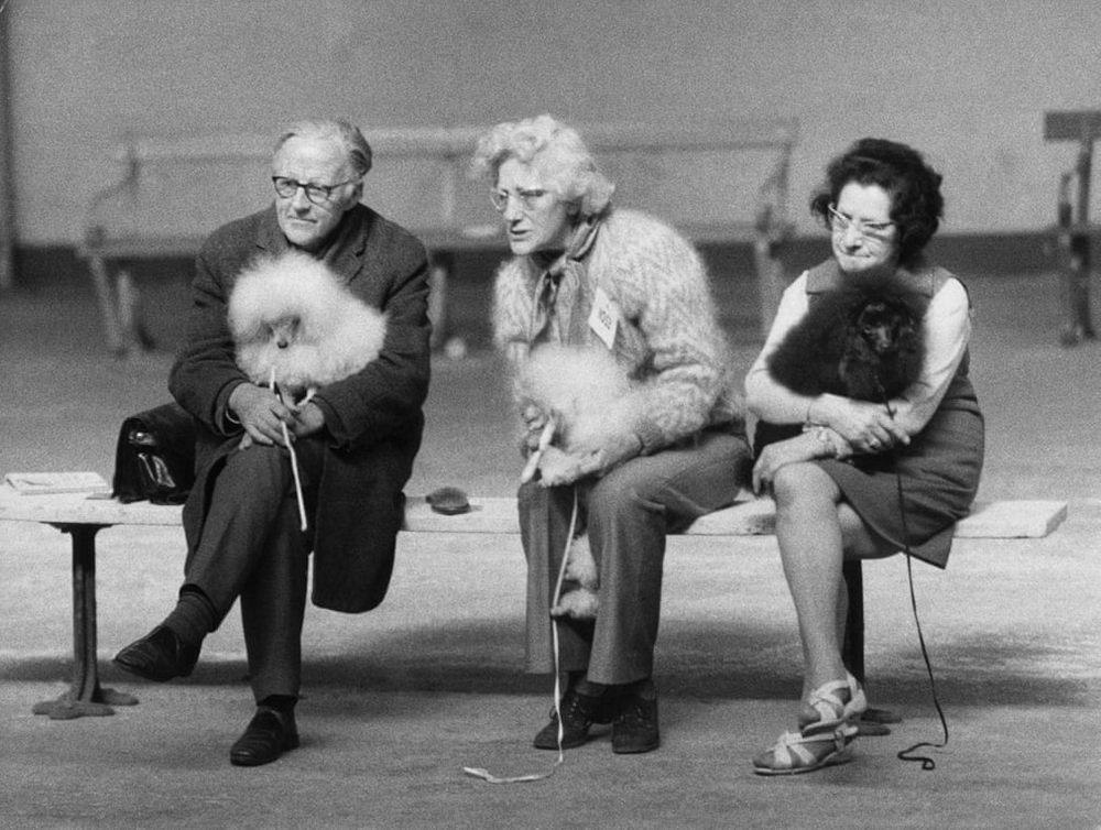 «Дай_ Джим_ на счастье лапу мне»_ фотографии Ширли Бейкер с выставок собак 1960_70_х 2