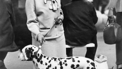 Выставки собак 1961-1978 годов: фотографии Ширли Бейкер