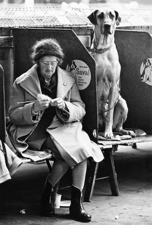 «Дай_ Джим_ на счастье лапу мне»_ фотографии Ширли Бейкер с выставок собак 1960_70_х 4