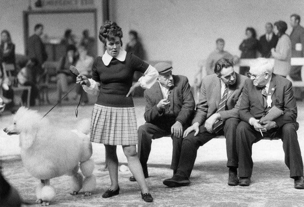 «Дай_ Джим_ на счастье лапу мне»_ фотографии Ширли Бейкер с выставок собак 1960_70_х 5