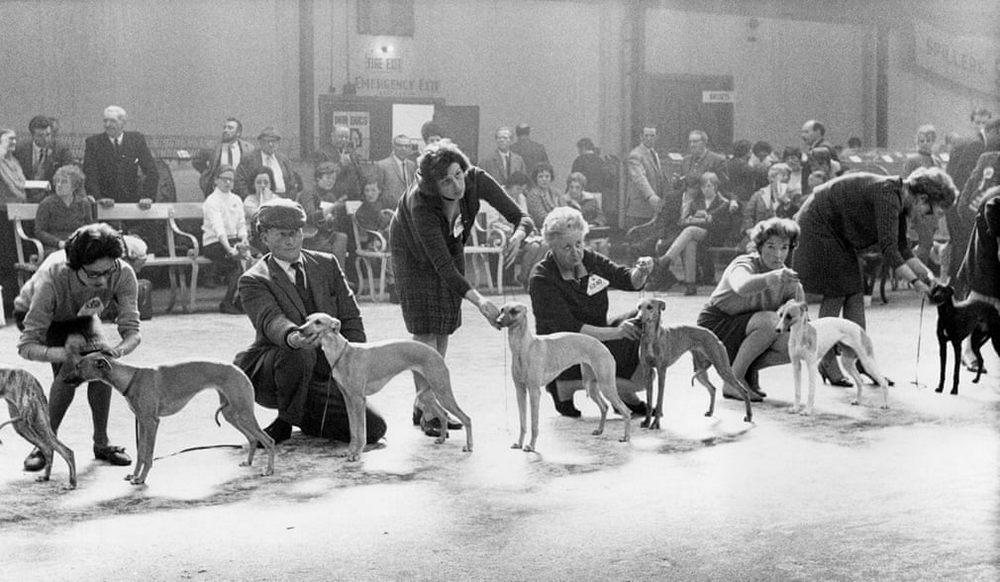 «Дай_ Джим_ на счастье лапу мне»_ фотографии Ширли Бейкер с выставок собак 1960_70_х 6