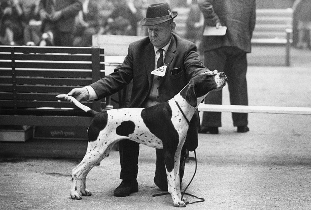 «Дай_ Джим_ на счастье лапу мне»_ фотографии Ширли Бейкер с выставок собак 1960_70_х 7