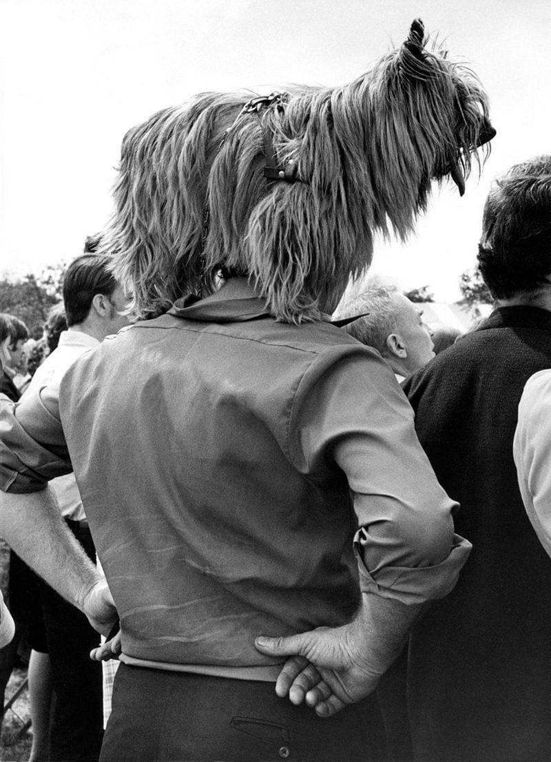 «Дай_ Джим_ на счастье лапу мне»_ фотографии Ширли Бейкер с выставок собак 1960_70_х 9