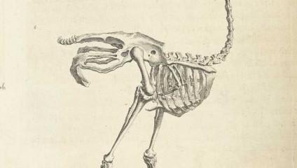 Искусство в анатомии: Уильям Чеселден «Остеография», 1733 год