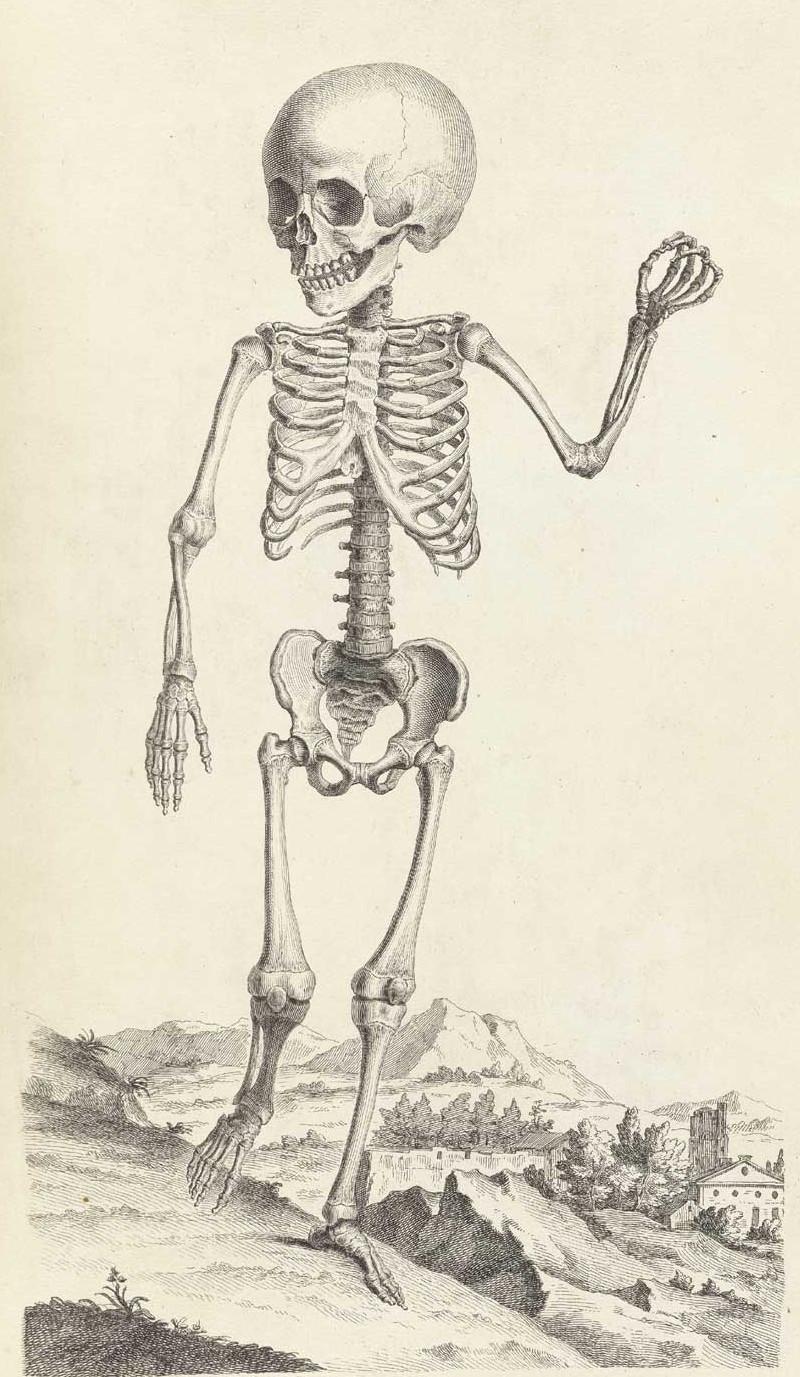 Достоверность и изящество в костях. «Остеография» Уильяма Чеселдена (1733) 15