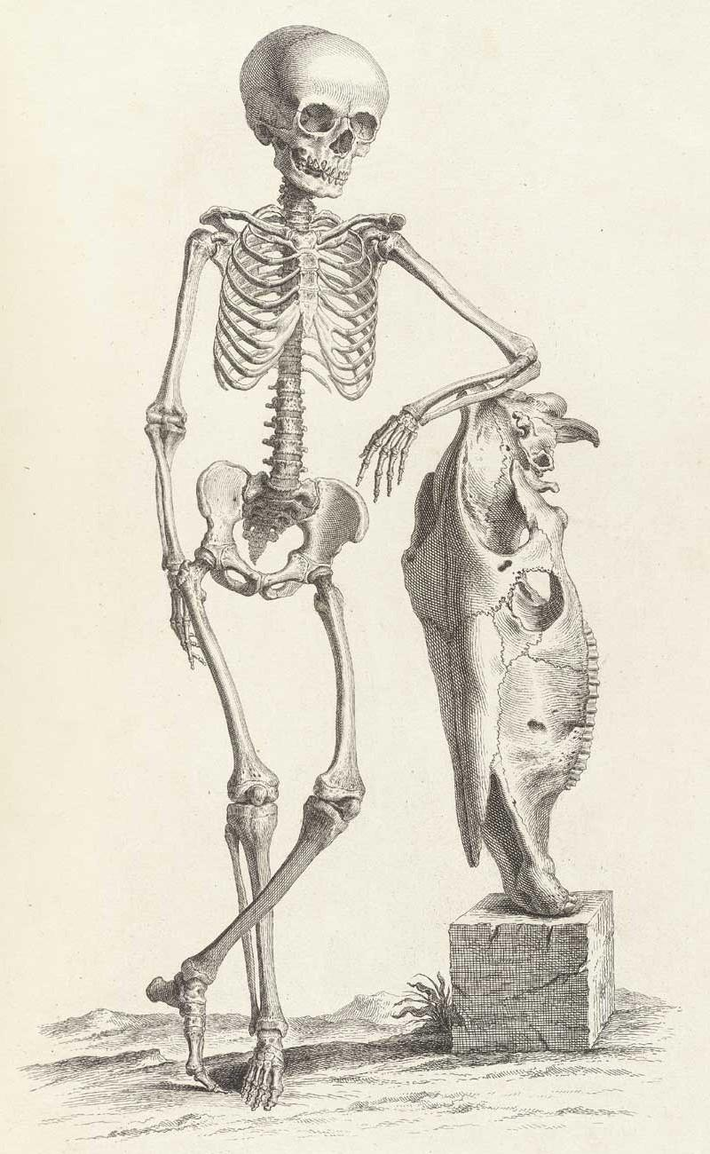 Достоверность и изящество в костях. «Остеография» Уильяма Чеселдена (1733) 16