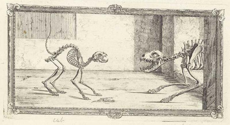 Достоверность и изящество в костях. «Остеография» Уильяма Чеселдена (1733) 3
