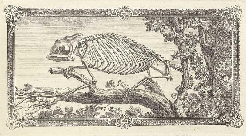 Достоверность и изящество в костях. «Остеография» Уильяма Чеселдена (1733) 8