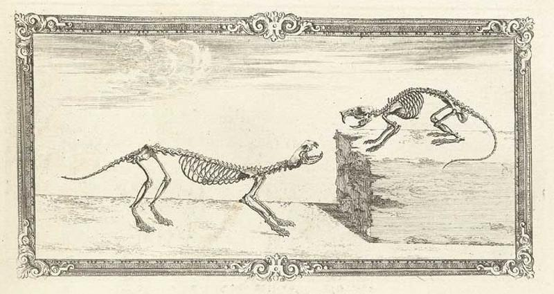 Достоверность и изящество в костях. «Остеография» Уильяма Чеселдена (1733) 9