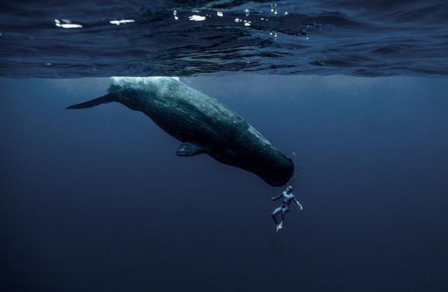 «На одном дыхании вокруг света». Философия глубины в короткометражке фридайвера Гийома Нери