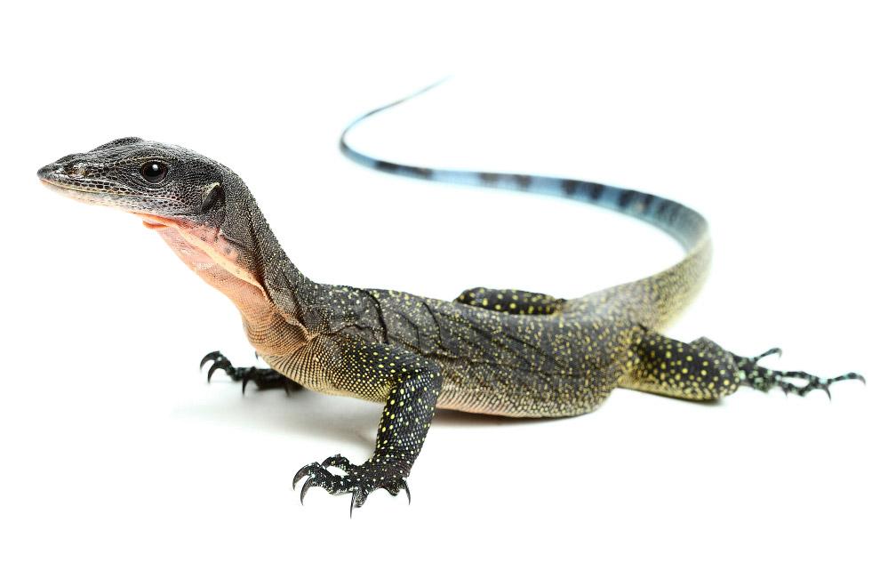 Рептилии_ жизнь на белом (12)