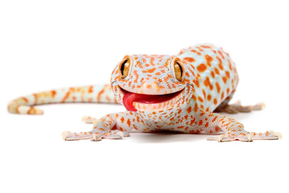 Рептилии_ жизнь на белом (14)