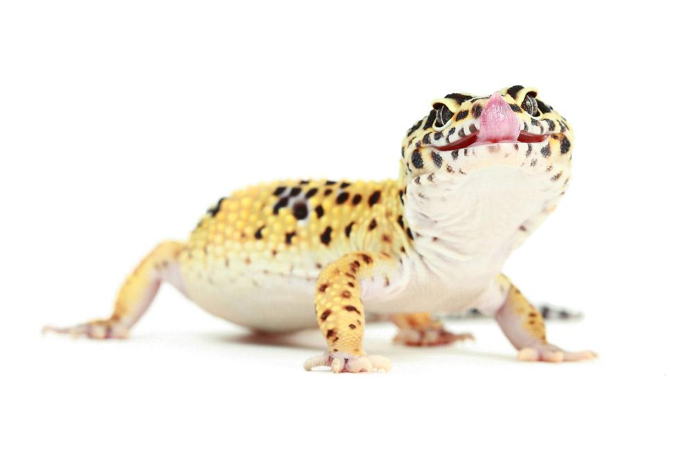 Рептилии_ жизнь на белом (2)