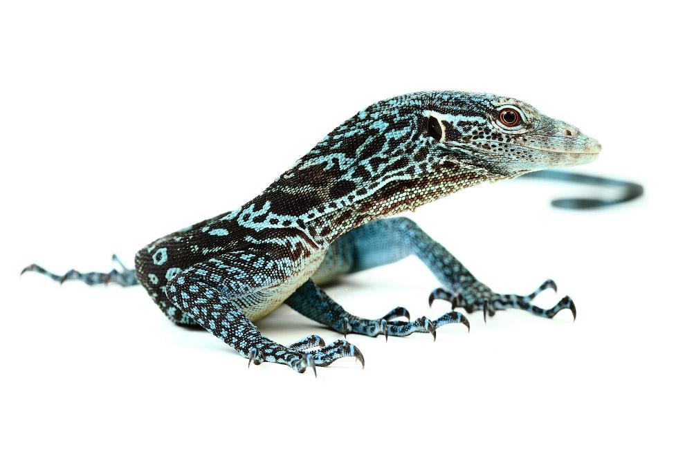 Рептилии_ жизнь на белом (3)