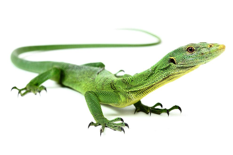 Рептилии_ жизнь на белом (4)