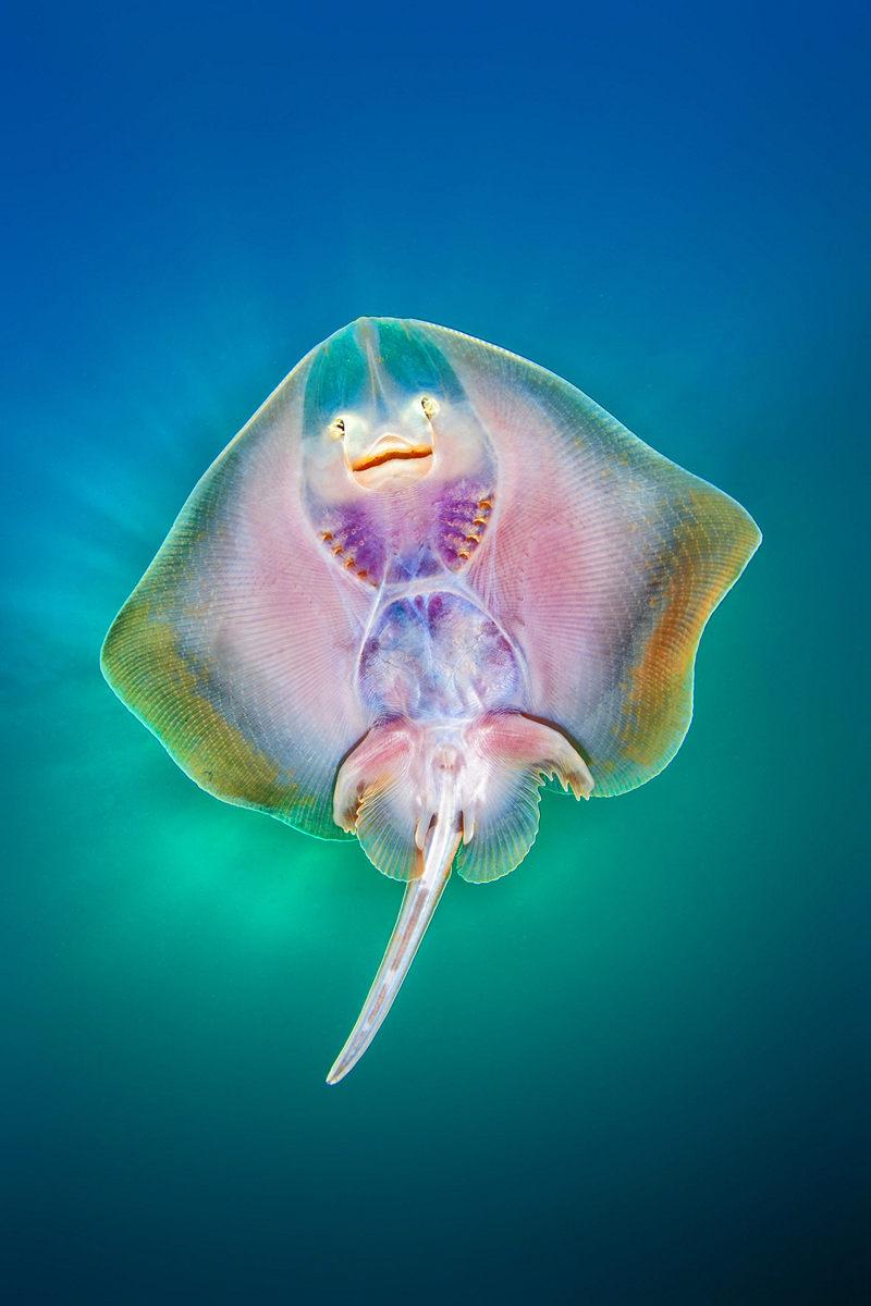 Жизнь морских глубин в работах победителей конкурса «Подводный фотограф года – 2019» 11