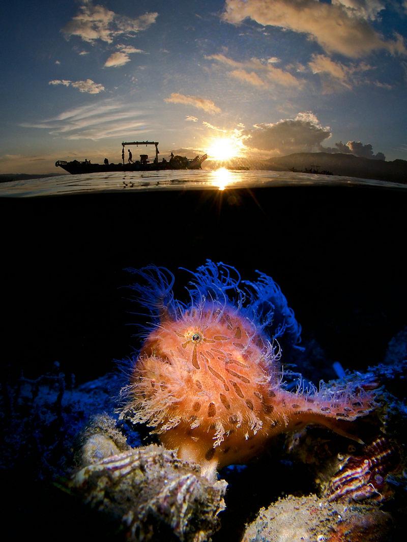 Жизнь морских глубин в работах победителей конкурса «Подводный фотограф года – 2019» 15