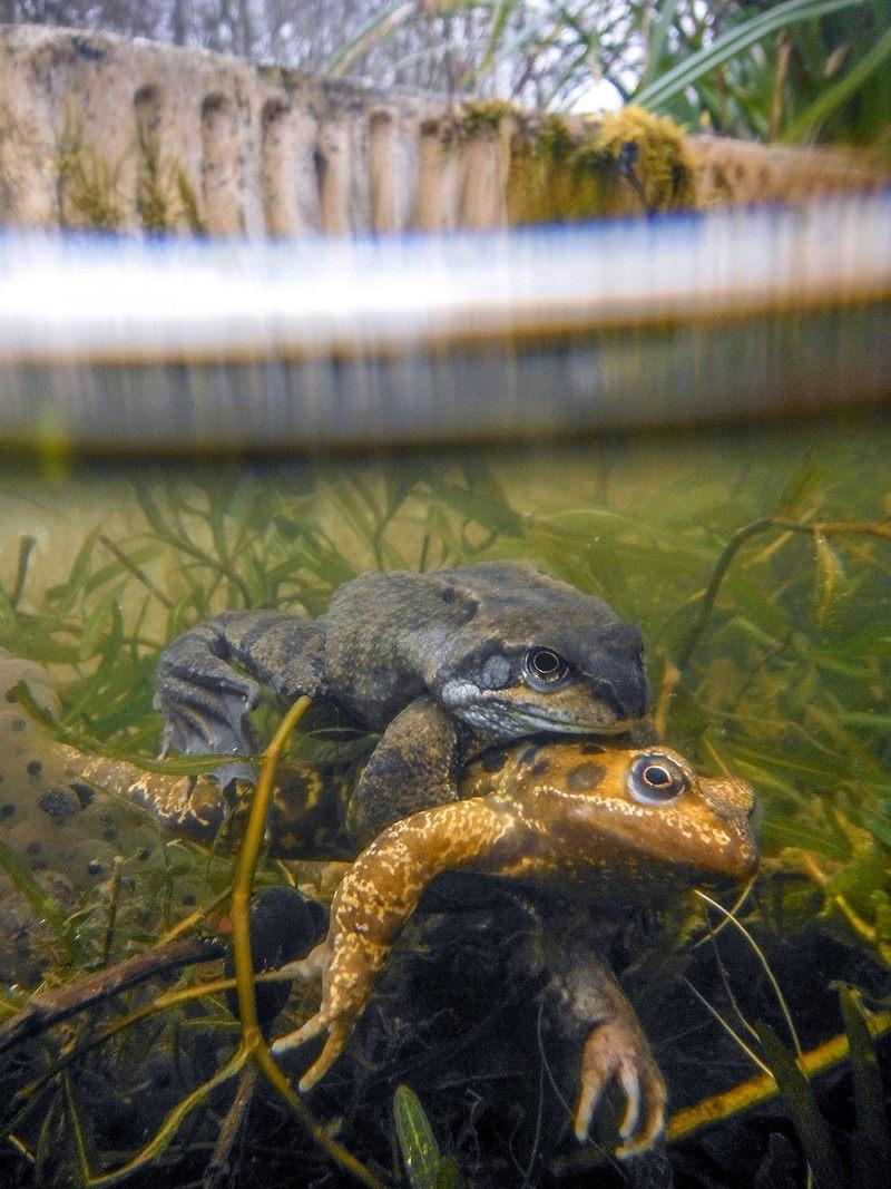 Жизнь морских глубин в работах победителей конкурса «Подводный фотограф года – 2019» 26