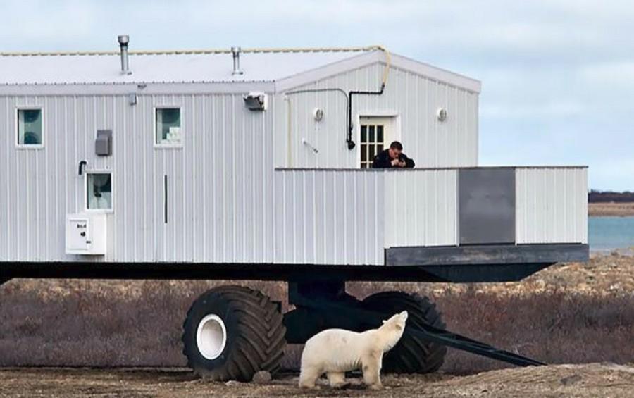 Передвижной отель рядом с белыми медведями