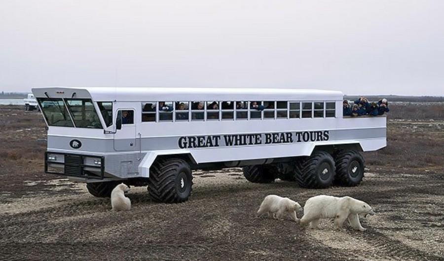 Жизнь в отеле окруженный белыми медведями