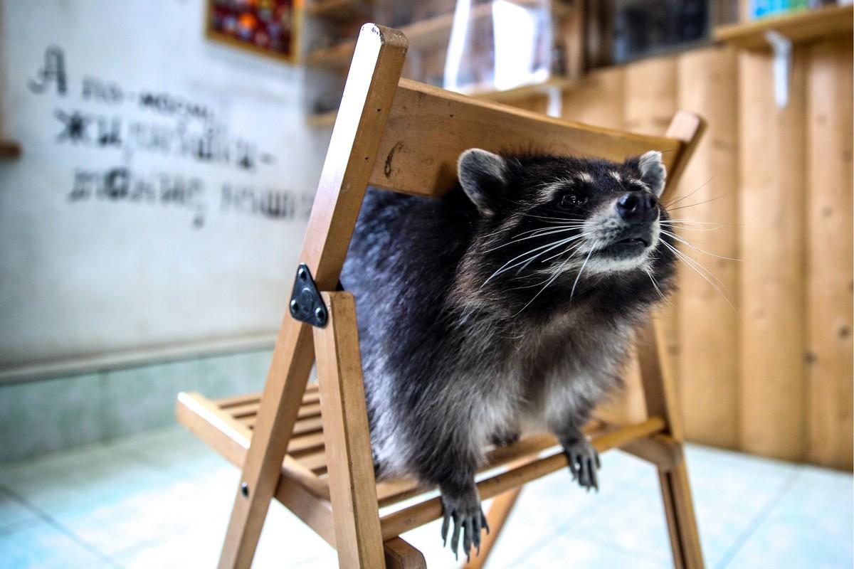 Милые и смешные: фотографии животных