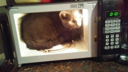 Факты того, что кошки – основные хозяева в квартире