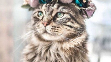 25 домашних животных в венках из цветов от одаренного дизайнера
