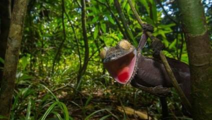 Скалящийся геккон - гуру маскировки