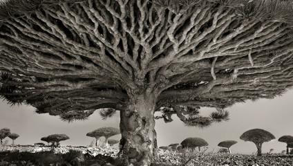 Фотограф 14 лет делала снимки древнейших деревьев на свете