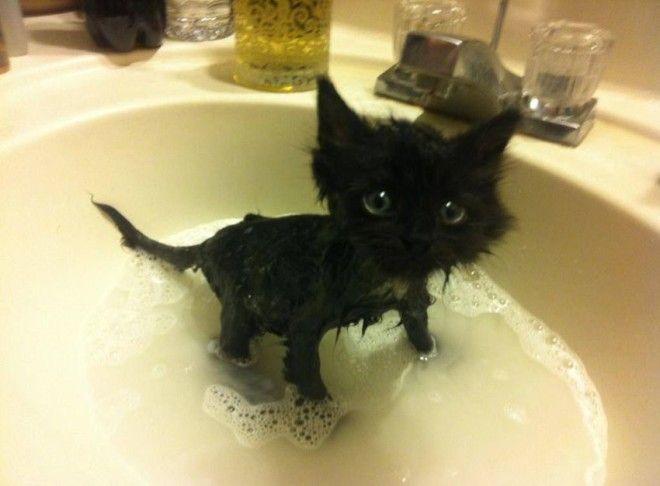 Коварные коты похоже намереваются прикончить своего хозяина