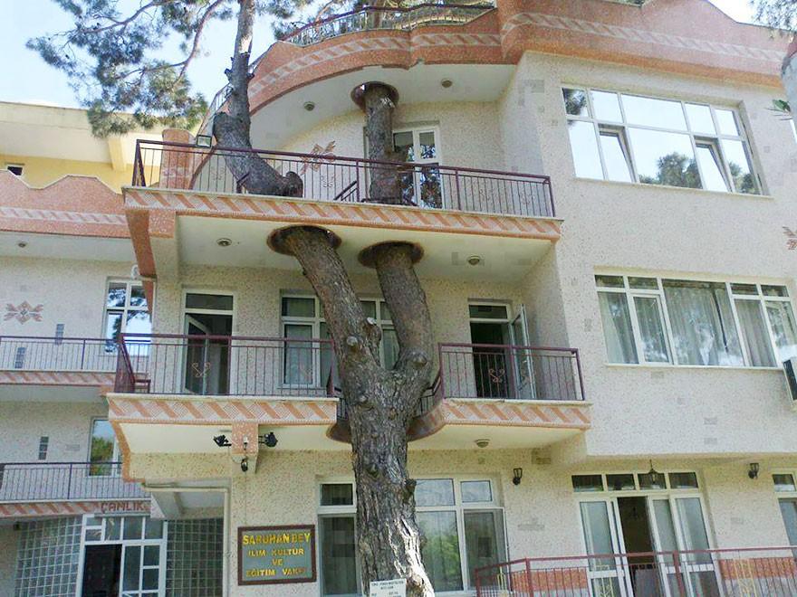architecturearoundtrees04