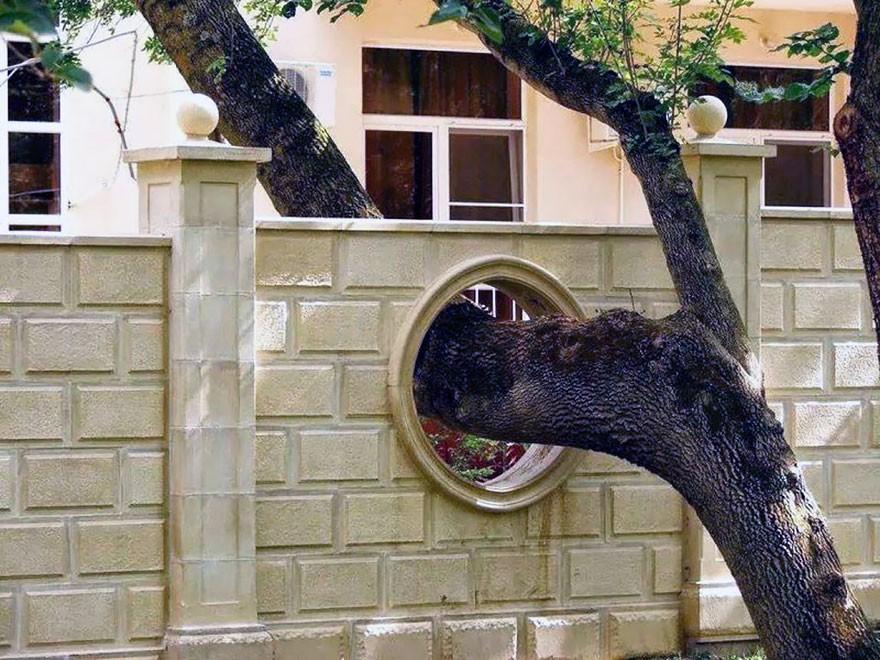 architecturearoundtrees09