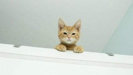 14 убедительных фото на тему того, что коты – визитеры с другой планеты