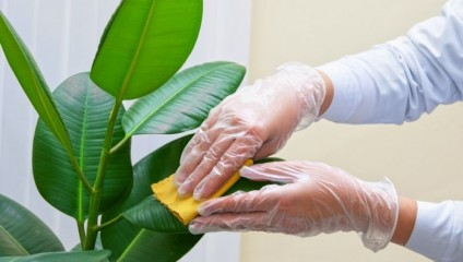 Способы использования майонеза помимо кулинарии: аппетитный помощник в домашнем хозяйстве