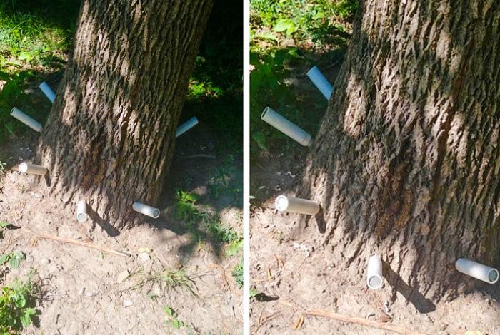 Прививки для деревьев