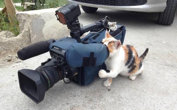 Коты-работяги, ждавшие пятницу
