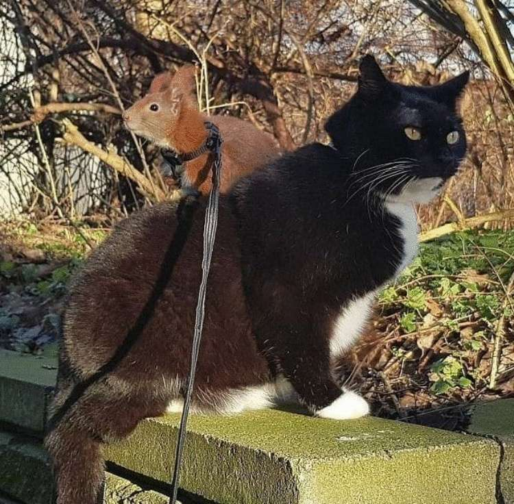 Кот и белка лучшие друзья — снимки этой необычной парочки