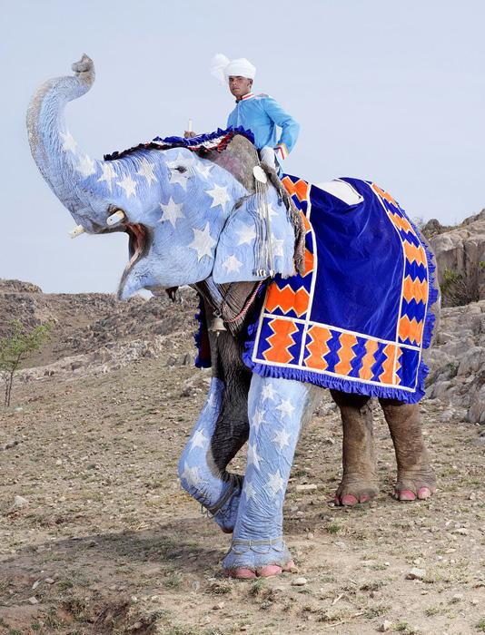 Слоновый конкурс красоты