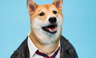 Стильно собаки, которые одеты лучше людей