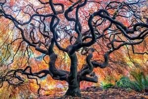 Выражение любви к Земле с помощью ярких пейзажных изображений