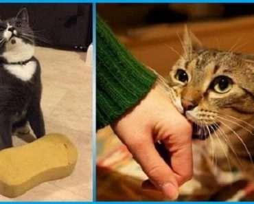 Вот какими способами выражают кошки любовь к людям