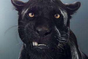 Великолепные портреты диких животных